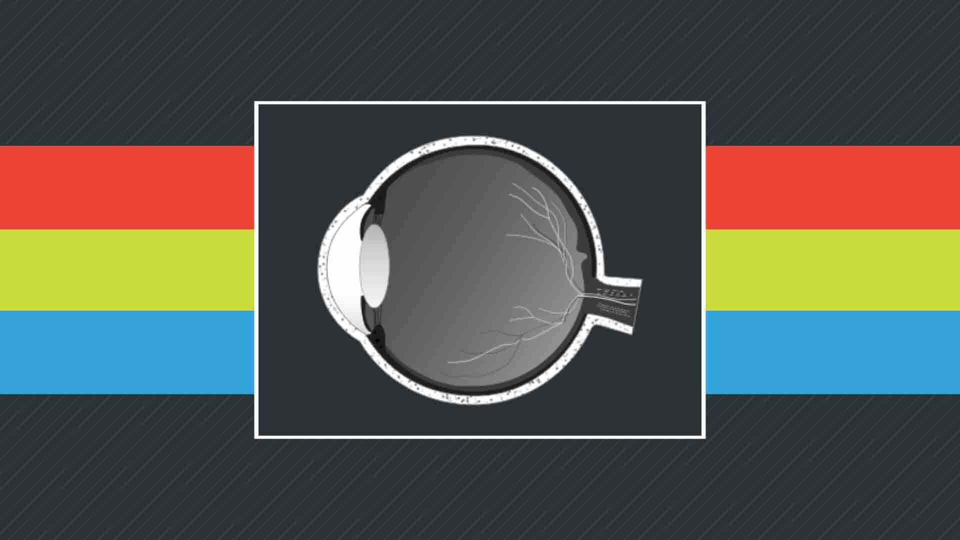 Olho e Percepção da Cor
